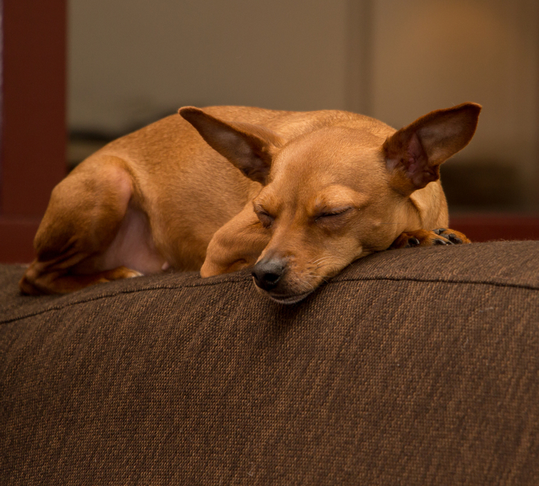wat een hondenleven... - vanwaar de term hondenleven.... hij heeft het niet slecht zo te zien
