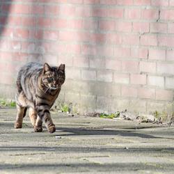 straat kat