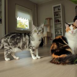 Lexie en Mila