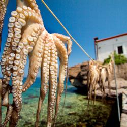 te droge octopus