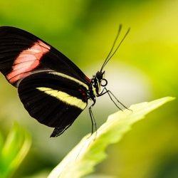vlinder4 (800x533)