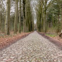 oude bosweg