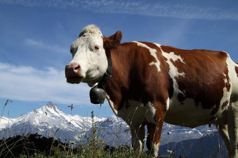 Op en top Alpen gevoel
