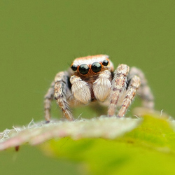 Voorkantje van het spring spinnetje