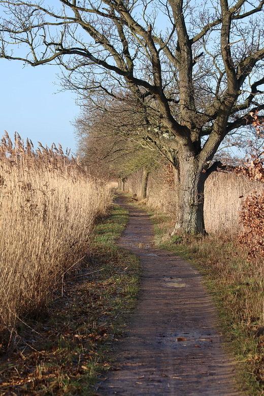 Rond Ankeveen. - Natuurgebied rond de ankeveense plassen. <br /> <br /> 5 januari 2017.<br /> Gr Bob.