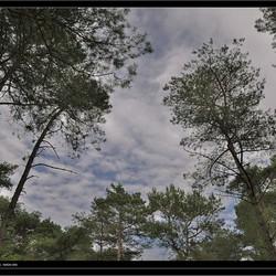 Rondje bomen