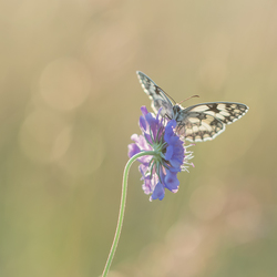 Open wings.....
