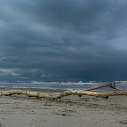 Boomtak aangespeold op het strand