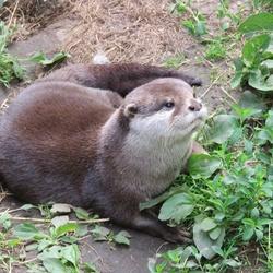 Nog een Otter