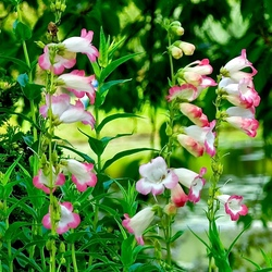 Botanische Tuinen bloem