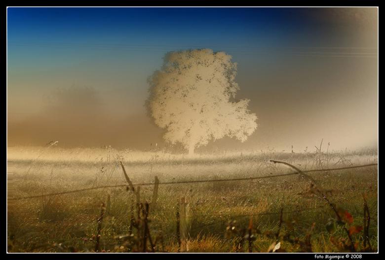 Boom in mist Nr 3 - Als afsluiting van de reeks nogmaals dezelfde boom in HDR. Iedereen weer bedankt voor de vorige reacties; ben benieuwd wat jullie