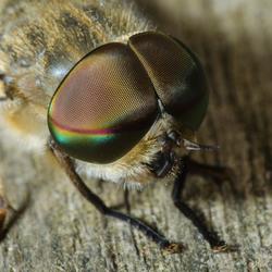 Hi Fly