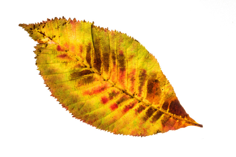Herfstblad 1
