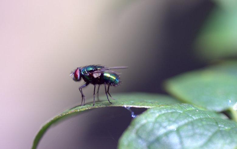 One day i'll fly away 2 - Tijdens het oefenen met mijn nieuwe macro lens.<br /> <br /> Samyang 100mm