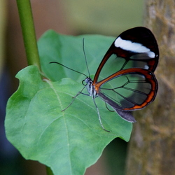 Vlindertuin Luttelgeest