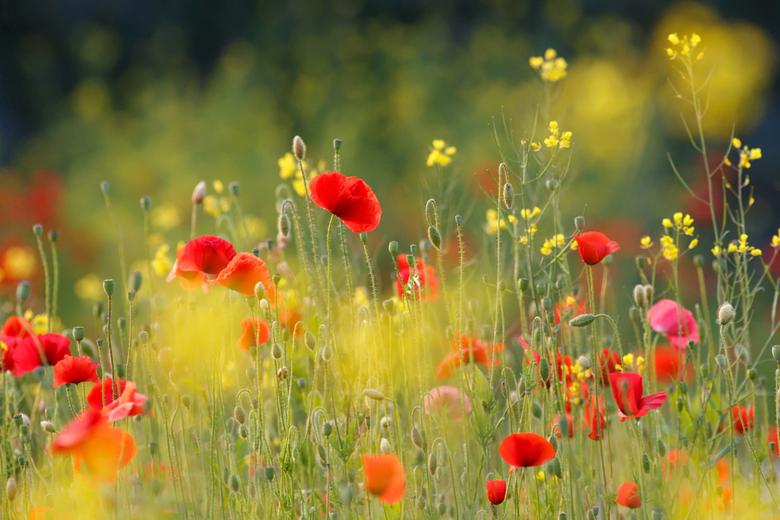 United Colours of Summer - &quot;Een schijnbaar eindeloze bloemenzee, juffers fladderden om me heen….<br /> Het zag er zo mooi uit, het rook zo lekke