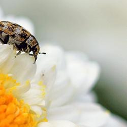 de kleine prachtige insectenwereld