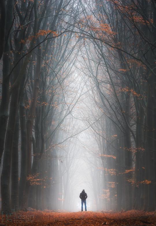 Een mistige ochtend in de bossen bij Odoorn - Een zeer sfeervolle ochtend in de bossen bij Odoorn..<br /> De laatste kleurtjes aan de bomen zorgen vo