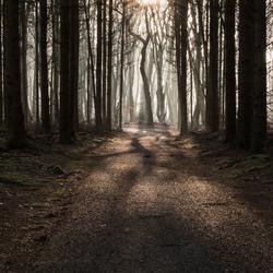 Winding path, twisting trees