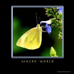MACRO WORLD VII