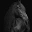 Fries Paard , zwart op zwart