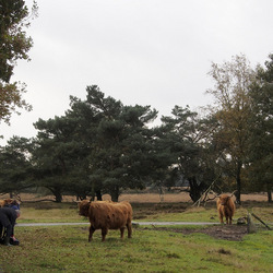 Kareltje en de Zoomers