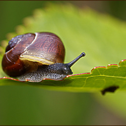 House for snail