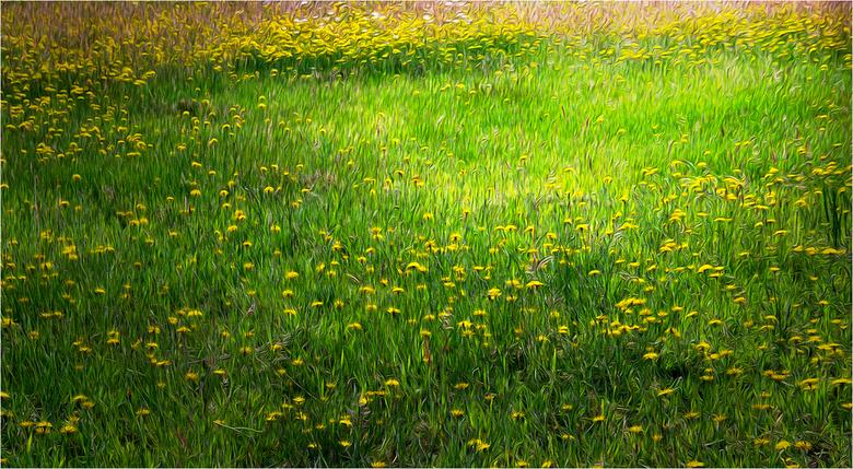 bloemenveld - Bloemenveld via PS filter gebruikt<br /> met de bedoeling een schilderijtoets te geven