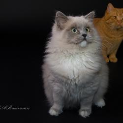 Jaylie en Ziggy