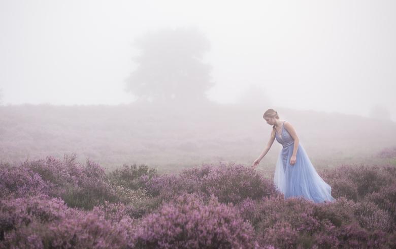 Purple misty - In de vroege ochtendmist wandelen over de heide