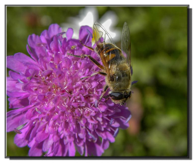 van de bloemtjes en de bijtjes 2.jpg - van de bloemtjes en de bijtjes, nou ja van elk één dan.