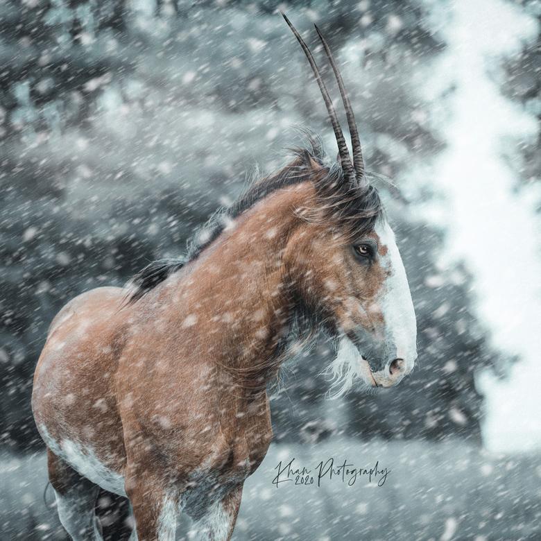 Sneeuwstorm - Mijn prachtig (helaas overleden) Clydesdale merrie (ja, die van het biermerk!) bewerkt in een winters sprookje!