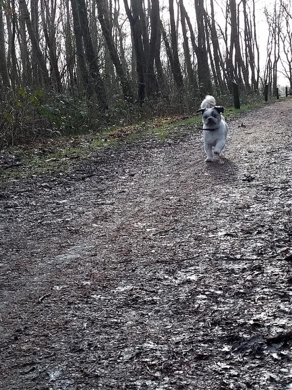 Doggie - Rennen tijdens uitlaten heerlijk