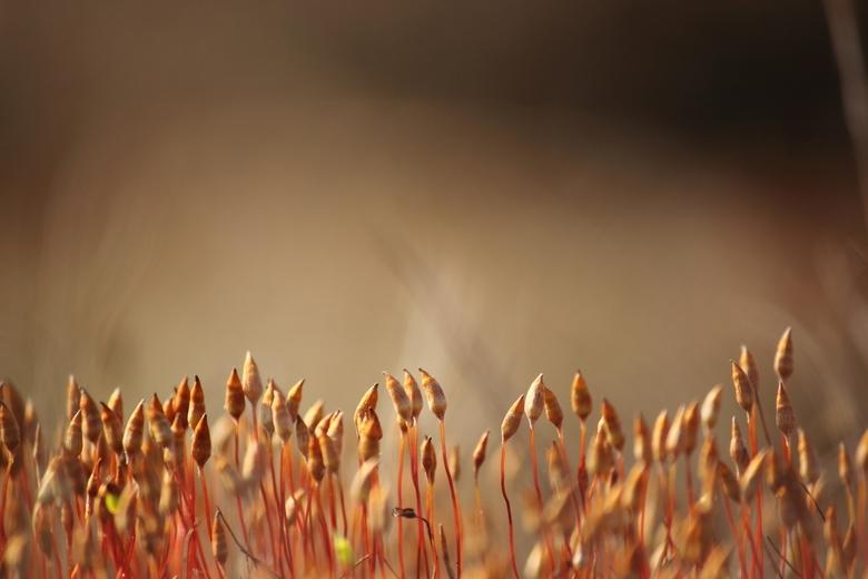 Dancing moss