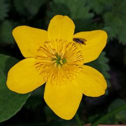 Een blom