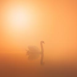 Sunrise over Swan lake