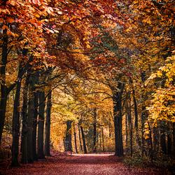 Kleuren van de herfst....
