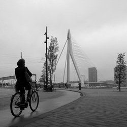 Bicycle Rotterdam