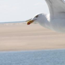 Ontmoeting in vogelvlucht