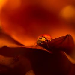Seeking a leafshelter