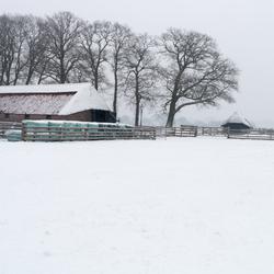 Sneeuw op de Ginkelse heide