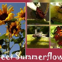 Sweet Summerflower