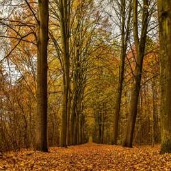 Laatste herfst kleuren ......
