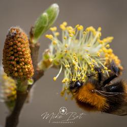 hello little bee