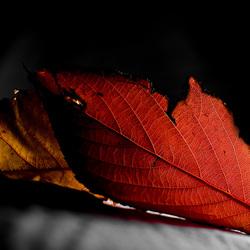 Bewerking: Autumn2!