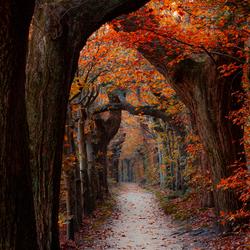 Herfst in Overijssel
