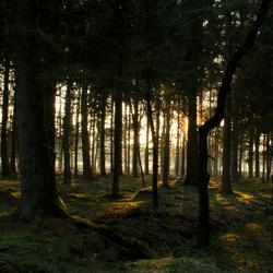 Winter bos (zonder sneeuw)