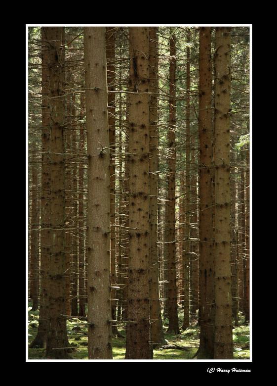 Eeuwig zingen de bossen... - Zweden is rijk aan bos. Vanaf Skane in Zuid-Zweden is het vrijwel overal naaldbos van dennen en sparren. Groen en bruin,