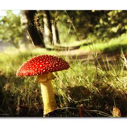 Magic of Autumn!!