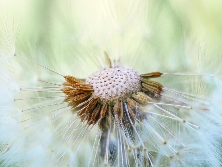 Pluizenbol - fotostack: 15 foto&#039;s uit de hand<br /> <br /> Ik wens iedereen alvast een heel fijn weekend - Nieske